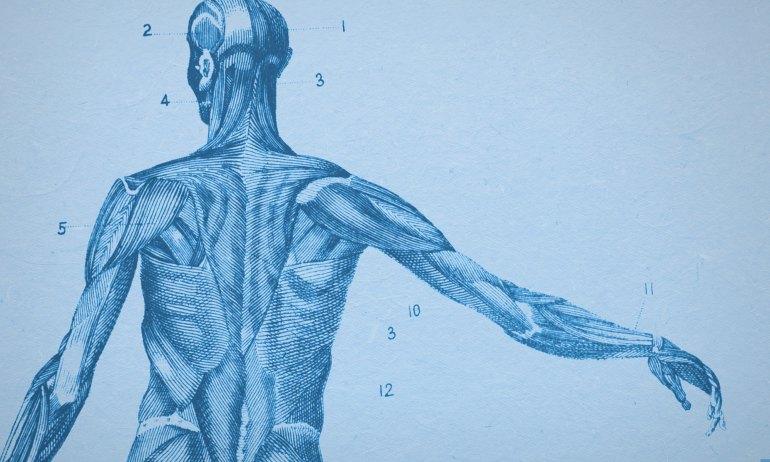 vintage human figure illustration