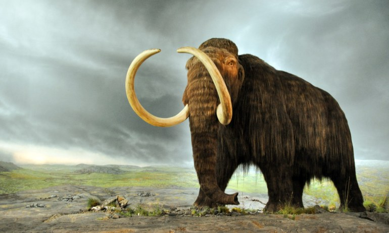 Woolly Mammoth, courtesy of the Royal BC Museum and Archives, Victoria, BC, Canada