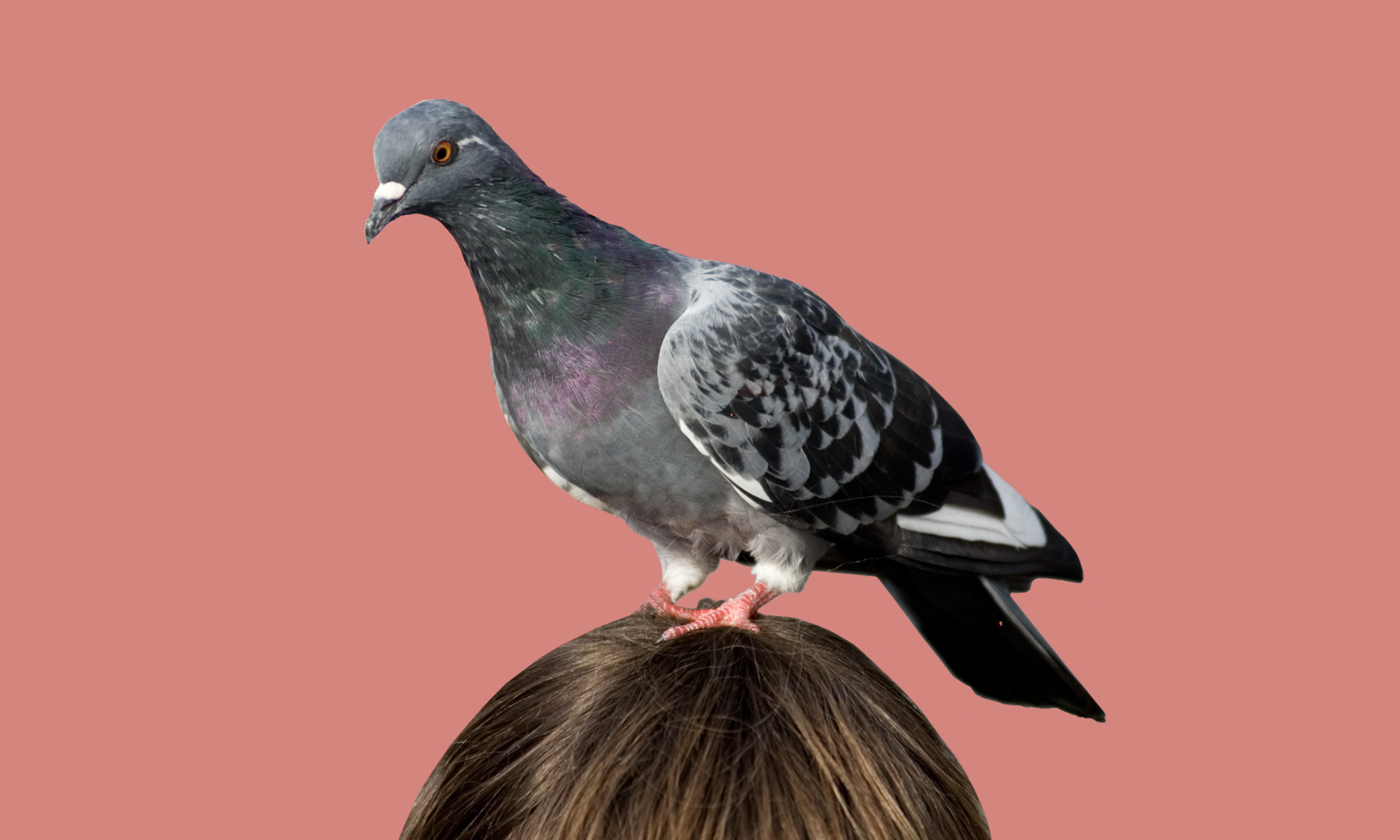 Are You Smarter Than A Pigeon