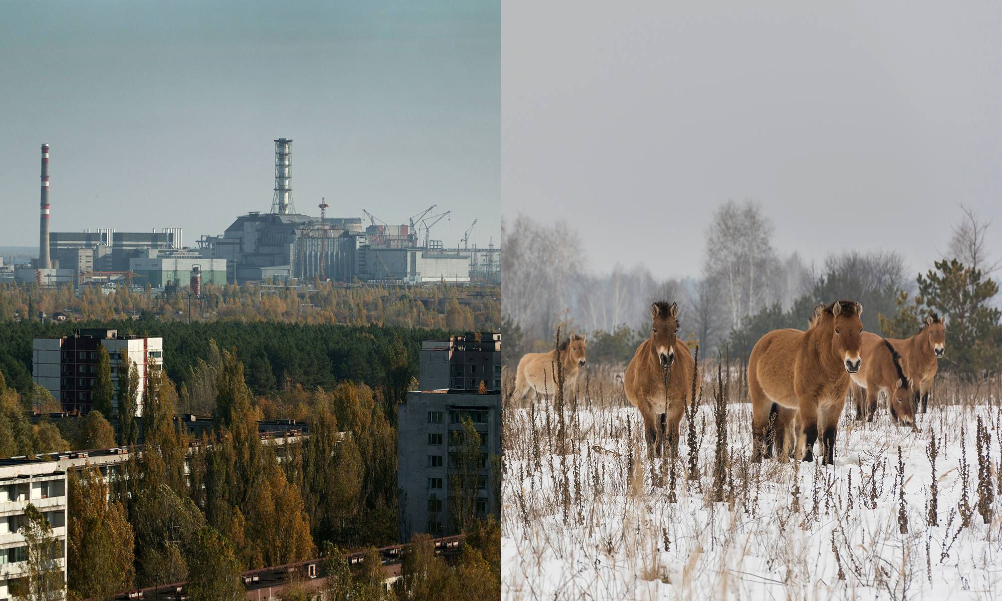 After A Nuclear Disaster Then What A Surprising Look At The Animals Of Chernobyl And Fukushima